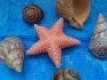 morskie-obitateli-iz-bisera-4.jpg
