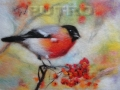 pticy-vaty-01.jpg