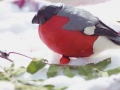 pticy-vaty-03.jpg
