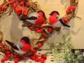 pticy-vaty-07.jpg
