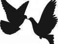 shablony-golubej-15.jpg