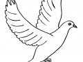 shablony-golubej-17.jpg