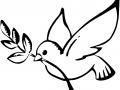 shablony-golubej-22.jpg