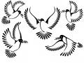shablony-golubej-37.jpg