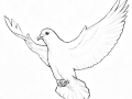 shablony-golubej-45.jpg