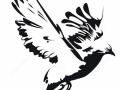 shablony-golubej-46.jpg