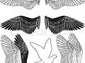 shablony-golubej-47.jpg