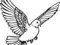 shablony-golubej-48.jpg