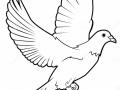shablony-golubej-49.jpg