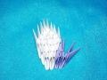 zhuravlik-origami-39.jpg