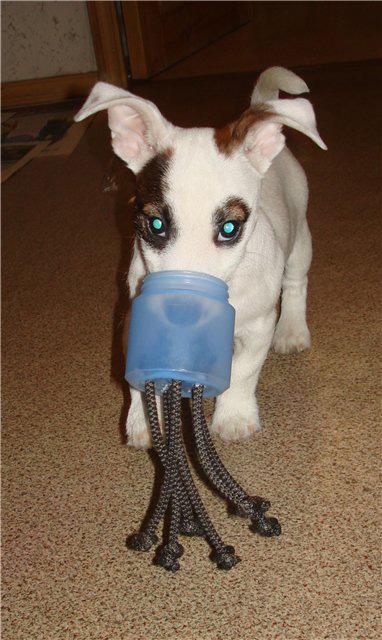 Как можно сделать игрушку для щенка своими руками