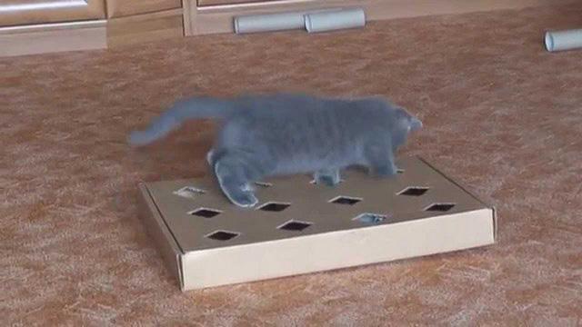 Как сделать своими руками игрушку для котят дома фото 83