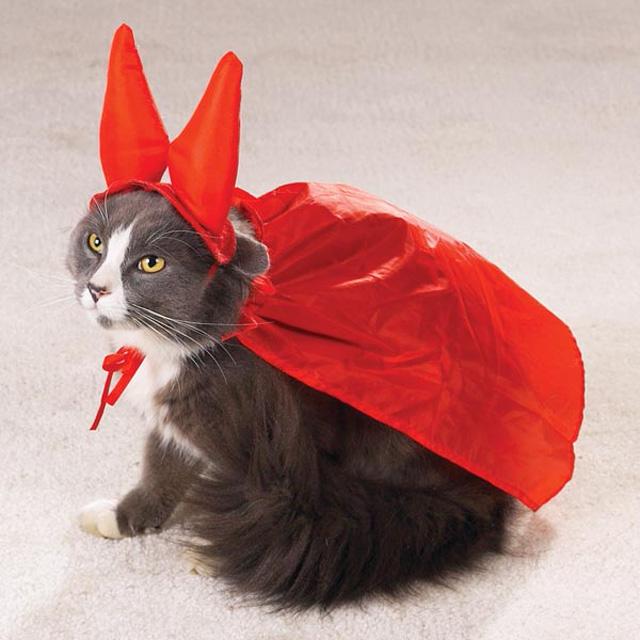 Костюм кошки для кошки