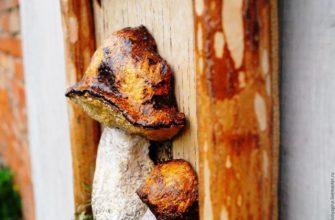 Картина с грибом